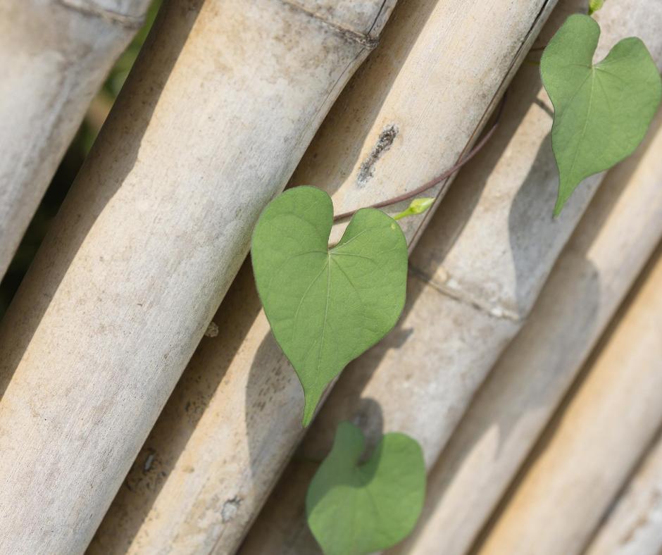 Hart voor Bamboo